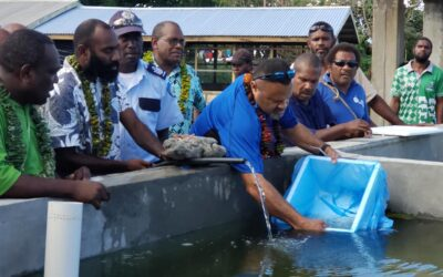 300 tilapia 'fingerlings' Released