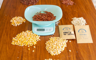 MALAMPA Farmers to Produce Own Seeds and Establish a Seed Bank