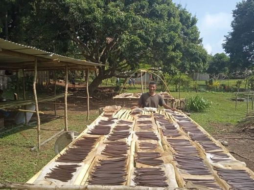 Aneityum Farmers Target Steady Production of First Grade Vanilla